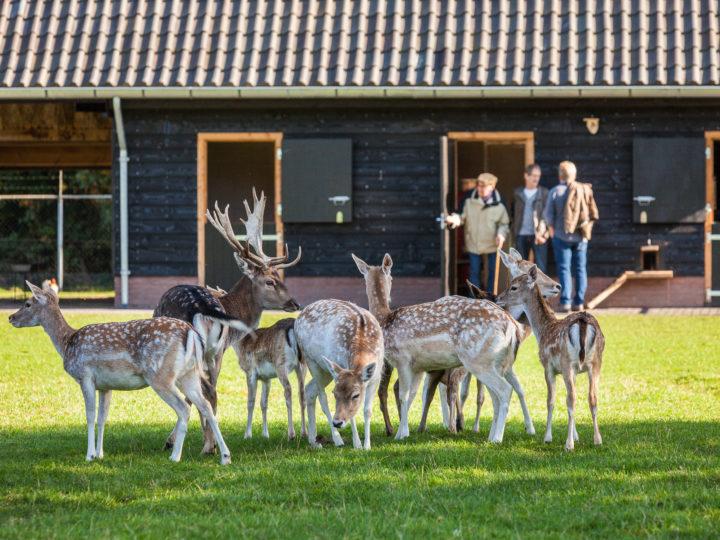 Nieuw dierenverblijf in Hertenkamp Klarenbeek kan weer generaties mee